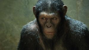 Des singes en été