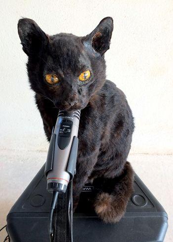 expositions grenoble un chat dans la gorge article publi par laetitia giry. Black Bedroom Furniture Sets. Home Design Ideas