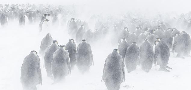Antarctica : hallucinations polaires