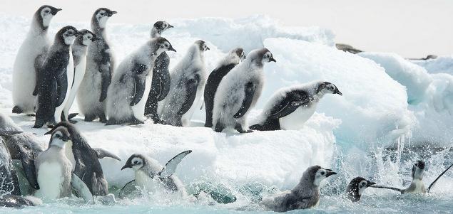 Expédition prolongée en Antarctique