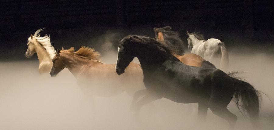 Bartabas : le cheval à corps et à vie