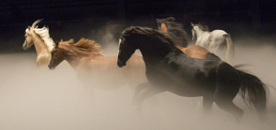 Le souffle des chevaux de Bartabas