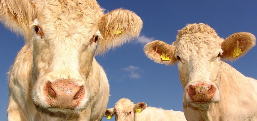 L'agriculture paysanne a rendez-vous à Couriot ce week-end