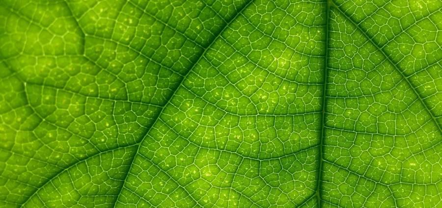 Nemeton plante des meubles