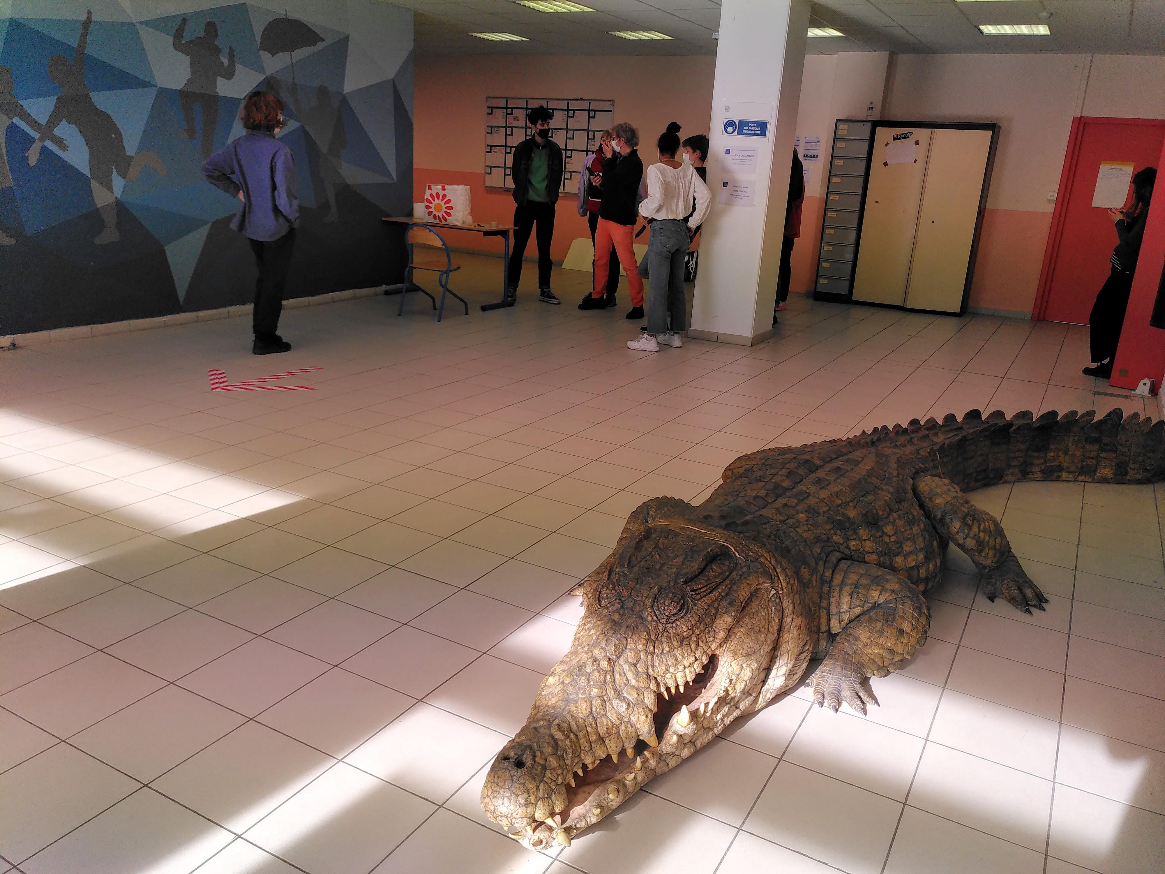 Le crocodile au premier plan est une star, il a joué avec Olivier Gourmet ©VR