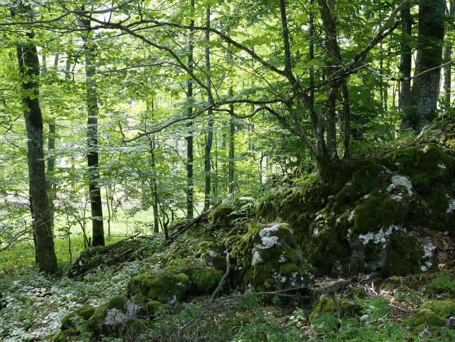 Cultivons-nous dans les bois