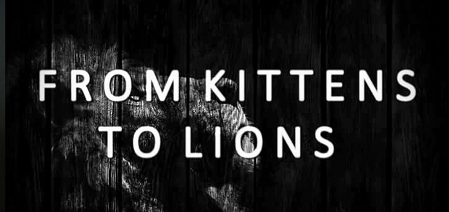 From Kittens to Lions, le rugissement